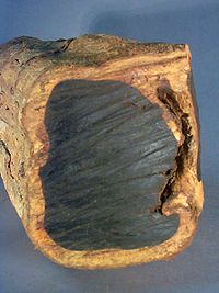 Ebonyis a dense black wood, most commonly yielded by several different species in the genusDiospyros