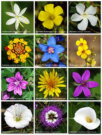 A flower, sometimes known as a bloom or blossom, is the reproductive structure found in flowering plants (plants of the division Magnoliophyta, also called angiosperms