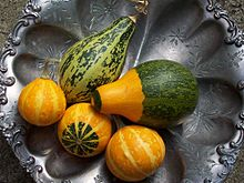 """A gourd is a plant of the family Cucurbitaceae or the fruit of the two genera of """"calabash tree"""", Crescentia and Amphitecna."""