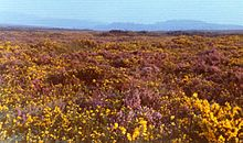 A heath or heathland is a shrubland habitat found mainly on free-draining infertile, acidic soils, and is characterised by open, low-growing woody vegetation.