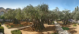 Gethsemane is a garden at the foot of the Mount of Olives in Jerusalem most famous as the place where, according to the gospels, Jesus prayed and his disciples slept the night before Jesus' crucifixion