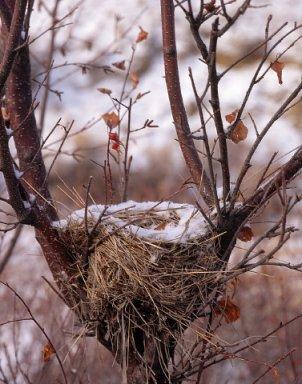 Bird Nest Image